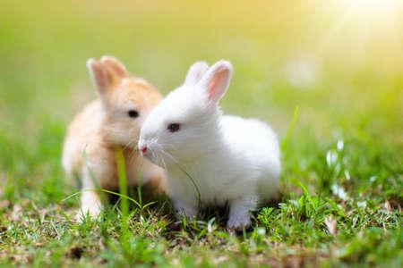 Conejo bebé comiendo hierba al aire libre en un día soleado de verano. Conejito de Pascua en jardín. Mascota casera para niño. Lindas mascotas y animales para familias con niños. Foto de archivo