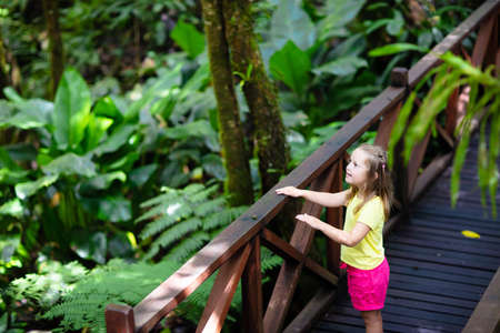 Little girl hiking in jungle. Child looking at wild orchid in tropical rainforest. Kid walking in exotic forest with flowers. Travel with children. Borneo jungle and mountains. Kids explore nature.