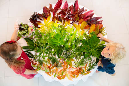 Kids pick colorful autumn leaves for school art project. Boy and girl making picture gluing fall leaf in rainbow color. Crafts for young children. Preschool and kindergarten arts homework. Reklamní fotografie - 116565443