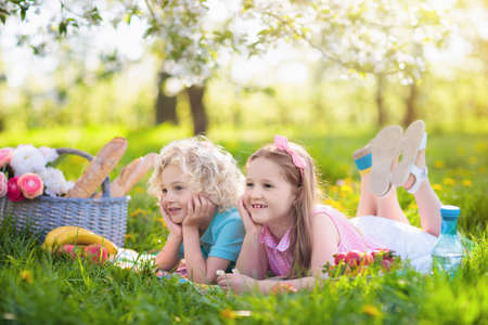 Family picnic in spring park with blooming cherry trees. Kids eating fruit and bread lunch outdoors in blooming apple garden sitting on a blanket with picnic basket. Healthy nutrition for children. Stock Photo