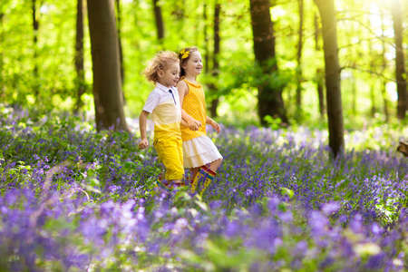 Kids running in bluebell woods. Children play in spring park with wild bluebell flowers. Boy and girl gardening. Garden plants on sunny day. Friends fun outdoor. Brother and sister pick flower bouquet Stock fotó