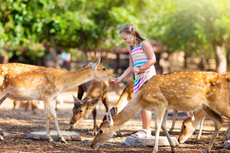 Child feeding wild deer at petting zoo. Kids feed animals at outdoor safari park. Little girl watching reindeer on a farm. Kid and pet animal. Family summer trip to zoological garden. Herd of deers. Фото со стока