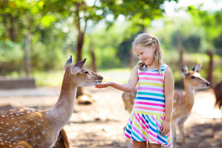 Child feeding wild deer at petting zoo. Kids feed animals at outdoor safari park. Little girl watching reindeer on a farm. Kid and pet animal. Family summer trip to zoological garden. Herd of deers. Foto de archivo