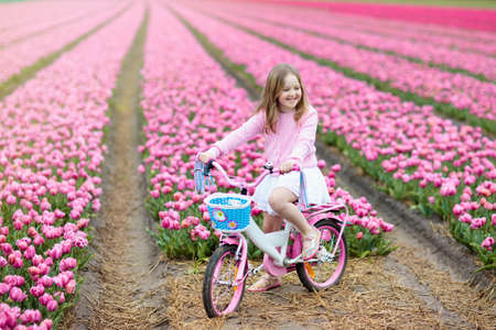 Child riding bike in tulip flower field during family spring vacation in Holland. Kid cycling in pink tulips. Little girl cycling in the Netherlands. European trip with kids. Travel with children.