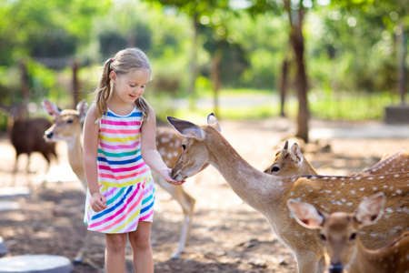 Child feeding wild deer at petting zoo. Kids feed animals at outdoor safari park. Little girl watching reindeer on a farm. Kid and pet animal. Family summer trip to zoological garden. Herd of deers. Stock Photo