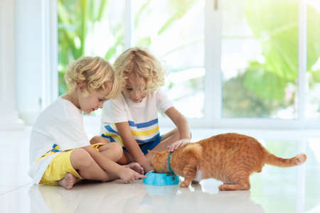Child feeding cat at home. Kid and pet. Little blond curly boy playing with kitten in white kitchen at window. Domestic animals and pets for children. Cats food and drink. Kids feed cat. Stock Photo