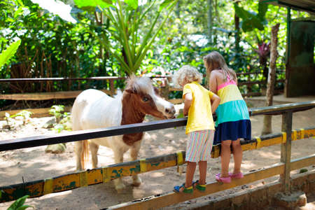 Little girl riding horse on summer vacation in country ranch. Kids learn to ride horses. Children and animals friendship. Little child on white pony. Kid feeding pet animal. Young jockey
