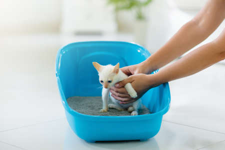 Cat in litter box. White little kitten in toilet with sand filler. Home pet care and hygiene. Potty training for young animal. Litterbox for cats. Stock fotó