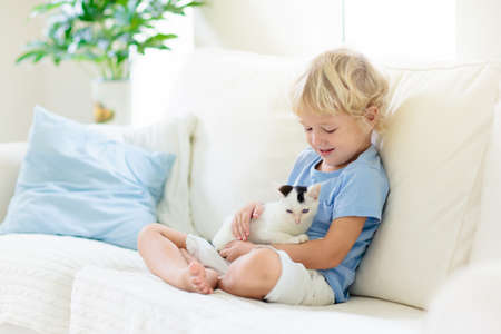 Child playing with baby cat. Kid holding white kitten. Little boy snuggling cute pet animal sitting on couch in sunny living room at home. Kids play with pets. Children and domestic animals. Stock Photo
