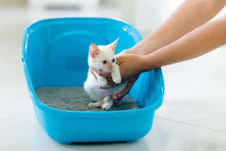 Cat in litter box. White little kitten in toilet with sand filler. Home pet care and hygiene. Potty training for young animal. Litterbox for cats. Standard-Bild