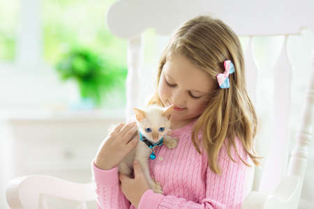 Child playing with baby cat. Kid holding white kitten. Little girl with cute pet animal sitting on couch in sunny living room at home. Kids play with pets. Children and domestic animals.