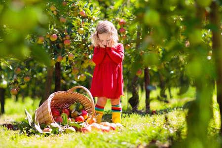 Niños recogiendo manzanas rojas maduras del árbol en la granja del país en un día soleado de otoño. Niño y niña recogen frutas en el huerto de manzanas. Niño con canasta. Niño divirtiéndose durante la época de la cosecha. Los niños juegan al aire libre.