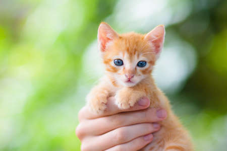 Man holding baby cat. Ginger kitten in human hands outdoor in sunny garden. Pet parent watching little animal. Owner and cats.