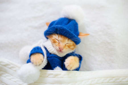 Baby cat in knitted sweater and hat. Ginger newborn kitten sleeping under woolen blanket. Cozy winter day with pet at home. Nap time. Christmas costume for animal. Cats sleep, relax, rest.