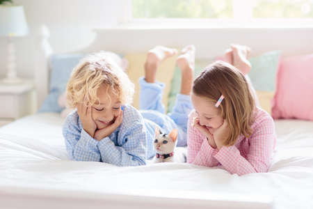Children play with baby cat in bed in white bedroom. Kid holding white kitten. Little girl and boy in pajamas with cute pet animal at home. Kids play with cats. Children and domestic animals pets. Reklamní fotografie