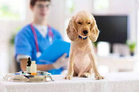 Vet examining dog. Puppy at veterinarian doctor. Animal clinic. Pet check up and vaccination. Health care for dogs.