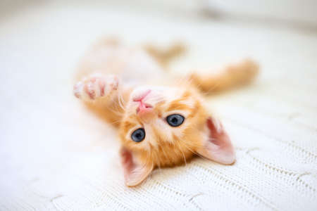 Baby cat sleeping. Ginger kitten under knitted blanket. Domestic animal. Sleep and cozy nap time. Home pet. Cute funny cats at home.