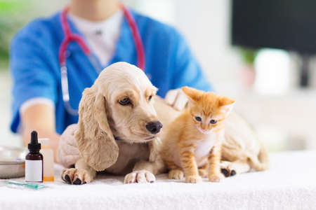 Vet examining dog and cat. Puppy and kitten at veterinarian doctor. Animal clinic. Pet check up and vaccination. Health care for dogs and cats.