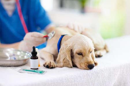 Cane d'esame veterinario. Cucciolo al medico veterinario. Clinica degli animali. Check up e vaccinazione animali da compagnia. Assistenza sanitaria per cani.