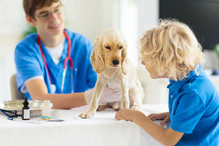 Vet examining dog, little boy watching. Child and puppy at veterinarian doctor. Kids and pets. Animal clinic. Pet check up and vaccination. Health care for dogs. American cocker spaniel in hospital.