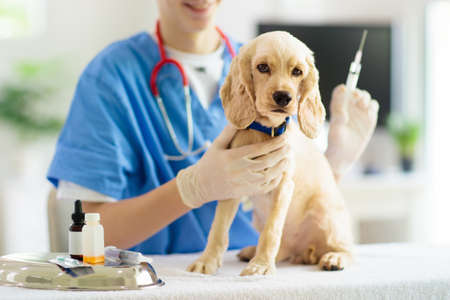 Vet examining dog. Puppy at veterinarian doctor. Animal clinic. Pet check up and vaccination. Health care for dogs. Standard-Bild
