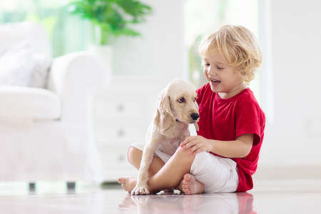 Child playing with baby dog. Kids play with puppy. Little boy and American cocker spaniel at couch at home. Children and pets at home. Kid sitting on the floor with pet. Animal care.