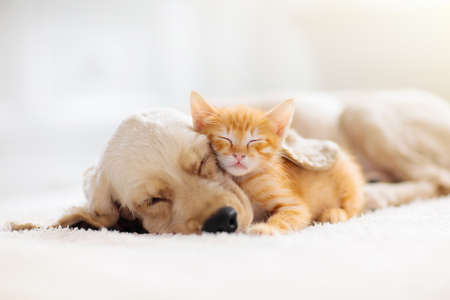 Cat and dog sleeping together. Kitten and puppy taking nap. Home pets. Animal care. Love and friendship. Domestic animals. Archivio Fotografico