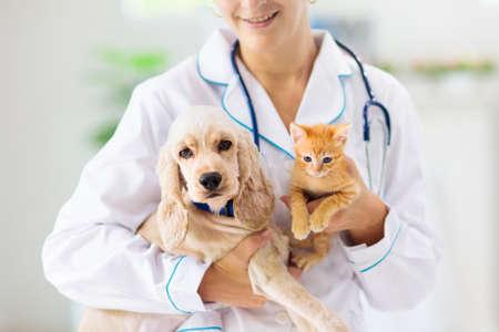 Veterinario examinando perros y gatos. Cachorro y gatito al médico veterinario. Clínica de animales. Control de mascotas y vacunación. Atención sanitaria para perros y gatos.