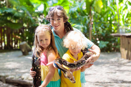 Kids holding python snake in tropical zoo. Children watching exotic reptile. Boy and girl with snakes on school trip to safari park. Brave kid learning to overcome fear and phobia. Rainforest animals.