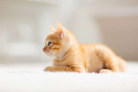 Baby cat sleeping. Ginger kitten on couch on blanket. Domestic animal. Sleep and cozy nap time. Home pet. Young cats. Cute funny cats at home. Фото со стока