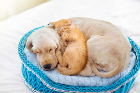 Cat and dog sleeping together. Kitten and puppy taking nap. Home pets. Animal care. Love and friendship. Domestic animals. 写真素材