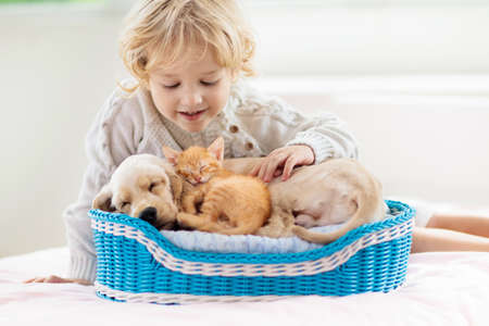 Child playing with baby dog and cat. Kids play with puppy and kitten. Little boy and American cocker spaniel on bed at home. Children and pets at home. Kid taking nap with pet. Animal care. Imagens