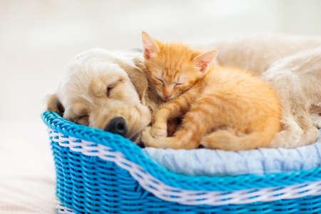 Kind, das mit Babyhund und -katze spielt Kinder spielen mit Welpen und Kätzchen. Kleiner Junge und amerikanischer Cockerspaniel auf dem Bett zu Hause. Kinder und Haustiere zu Hause. Kind, das mit Haustier ein Nickerchen macht. Tierschutz.