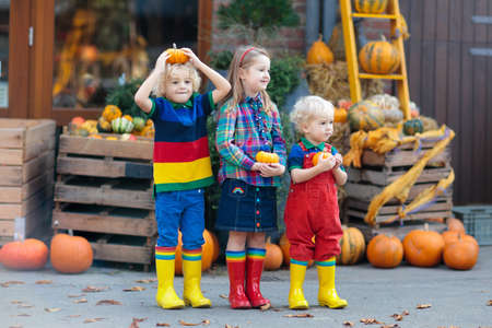 Group of little children enjoying harvest festival celebration at pumpkin patch. Kids picking and carving pumpkins at country farm on warm autumn day. Halloween and Thanksgiving time fun for family. Stok Fotoğraf