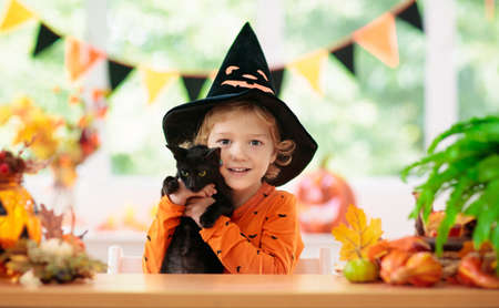 Child in Halloween costume. Kids trick or treat. Little boy and black cat with pumpkin lantern. Baby in witch hat and kitten. Autumn season holiday decoration. Home festive interior with fall leaves.