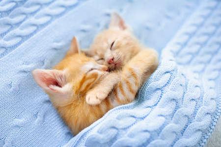 Babykatze schläft. Ingwerkätzchen auf Couch unter gestrickter Decke. Zwei Katzen kuscheln und umarmen sich. Haustier. Schlafen und gemütliche Nickerchen. Heimtier. Junge Kätzchen. Nette lustige Katzen zu Hause. Standard-Bild