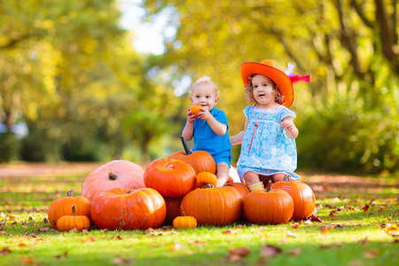 Group of little children enjoying harvest festival celebration at pumpkin patch. Kids picking and carving pumpkins at country farm on warm autumn day. Halloween and Thanksgiving time fun for family. Foto de archivo