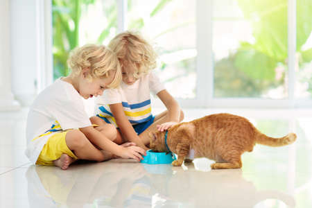 Child feeding cat at home. Kid and pet. Little blond curly boy playing with kitten in white kitchen at window. Domestic animals and pets for children. Cats food and drink.  Kids feed cat.