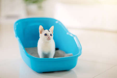 Cat in litter box. White little kitten in toilet with sand filler. Home pet care and hygiene. Potty training for young animal. Litterbox for cats. Banque d'images
