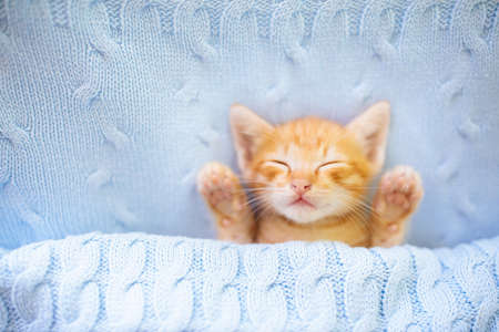 Baby cat sleeping. Ginger kitten on couch under knitted blanket. Domestic animal. Sleep and cozy nap time. Home pet. Young cats. Cute funny cats at home. Banco de Imagens
