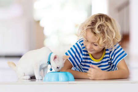 Child holding baby cat. Kids and pets. Little boy feeding cute little kitten at home. Domestic animal in family with kids. Children with pet animals.