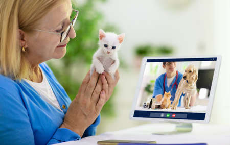 Online consultation with veterinarian. Vet examining animal via video chat. Cat check up during quarantine. Veterinary doctor checking pet in conference call. Remote medicine and emergency assistance.