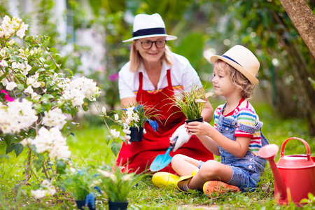 Woman and child gardening. Grandmother and little boy in sun hat watering garden plants and flowers. Kids work in beautiful sunny blooming backyard. Family outdoor hobby and healthy activity.