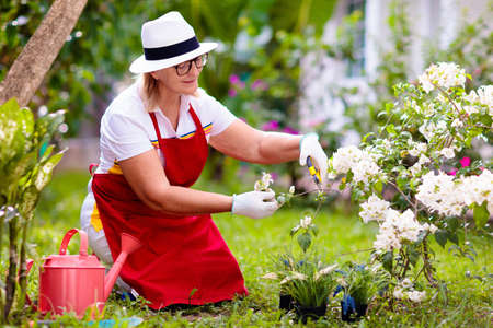 Senior woman gardening. Retired lady in sun hat watering garden plants and flowers. Beautiful sunny blooming backyard. Outdoor hobby and healthy activity. Female with garden tools and watering can. Reklamní fotografie