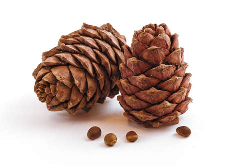 Two pine cones isolated  on a white background  photo