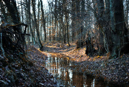 indian creek: small creek in a  autumnal forest, indian summer