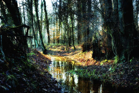 indian creek: small creek in a  autumnal forest, magical atmosphere