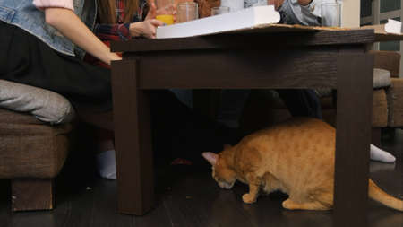 Red cat under the table, eating crumbs, while young friends eating pizza and talking 写真素材