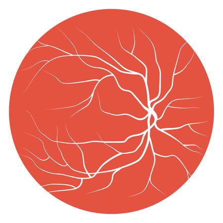 arterial: Eye Veins and Vessels Illustration