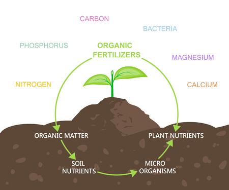 Diagram of Nutrients in Organic Fertilizers  イラスト・ベクター素材